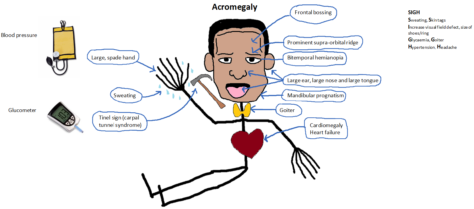 cardiovascular clinical case studies Cardiovascular system clinical case study the case of the overworked executive jm, a forty-six year old hispanic male.