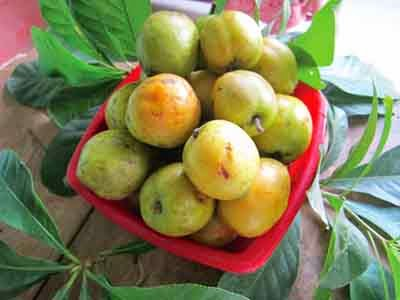 Ha Giang apples are listed in the Top 50 gift specialties