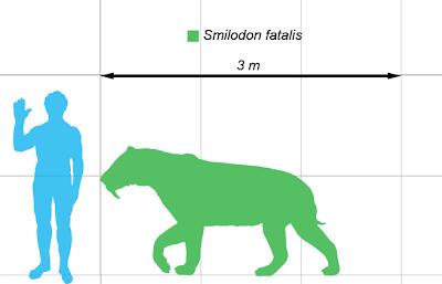 perbandingan ukuran tubuh smilodon dengan manusia