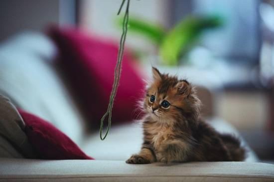 anak-kucing-comel
