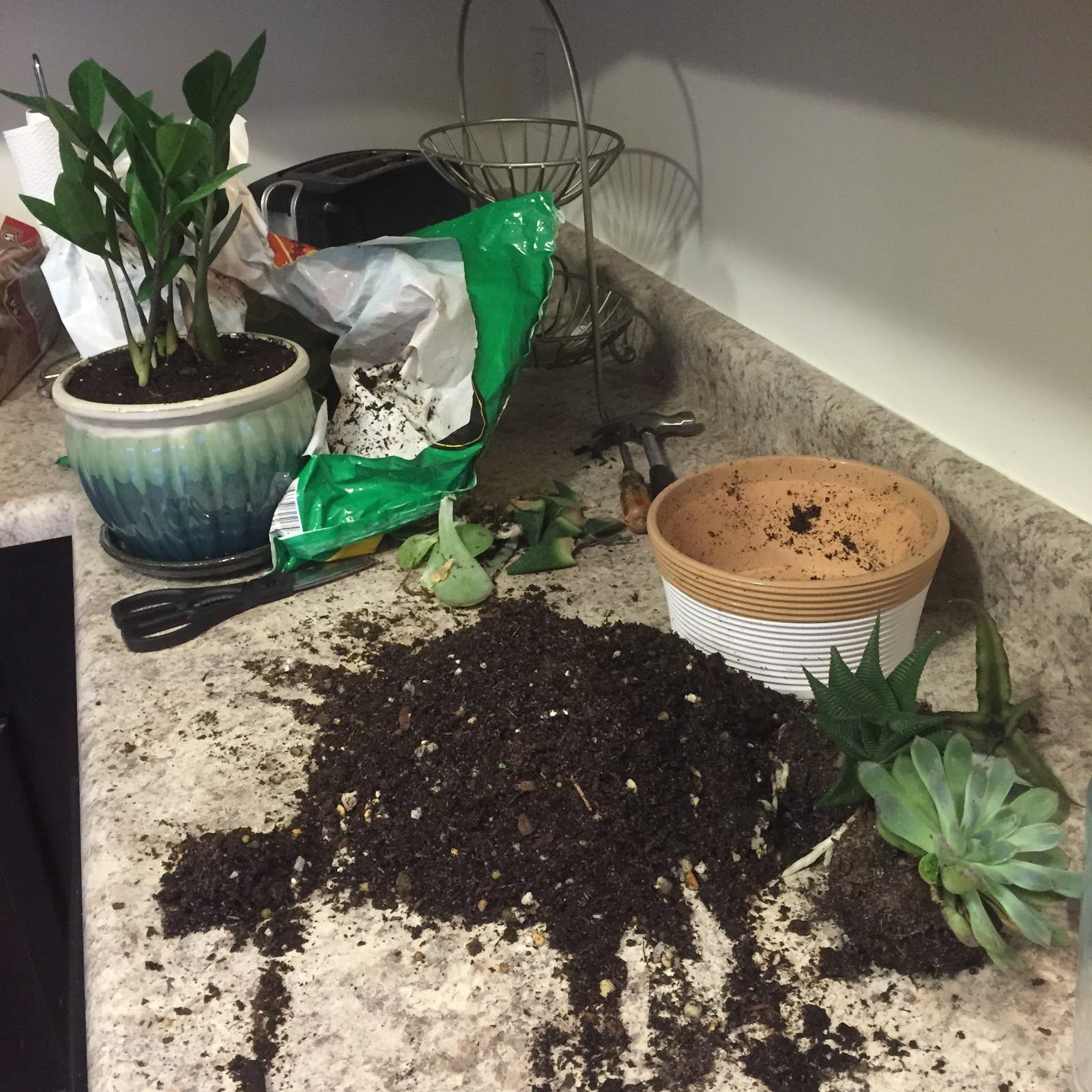potting soil in kitchen
