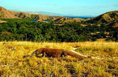 Gambar Pemandangan Alam Taman Nasional Pulau Komodo Nusa Tenggara