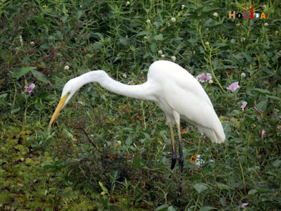 Migratory birds at the brindavan garden Mysore