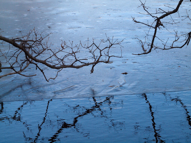Reflections & Shadows of Branches, Boat Pond, Central Park