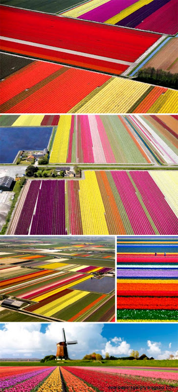 brilliant tulip fields colourful places  spaces « plenty of colour