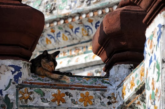 Cat in the Wat Arun temple in Bangkok Thailand