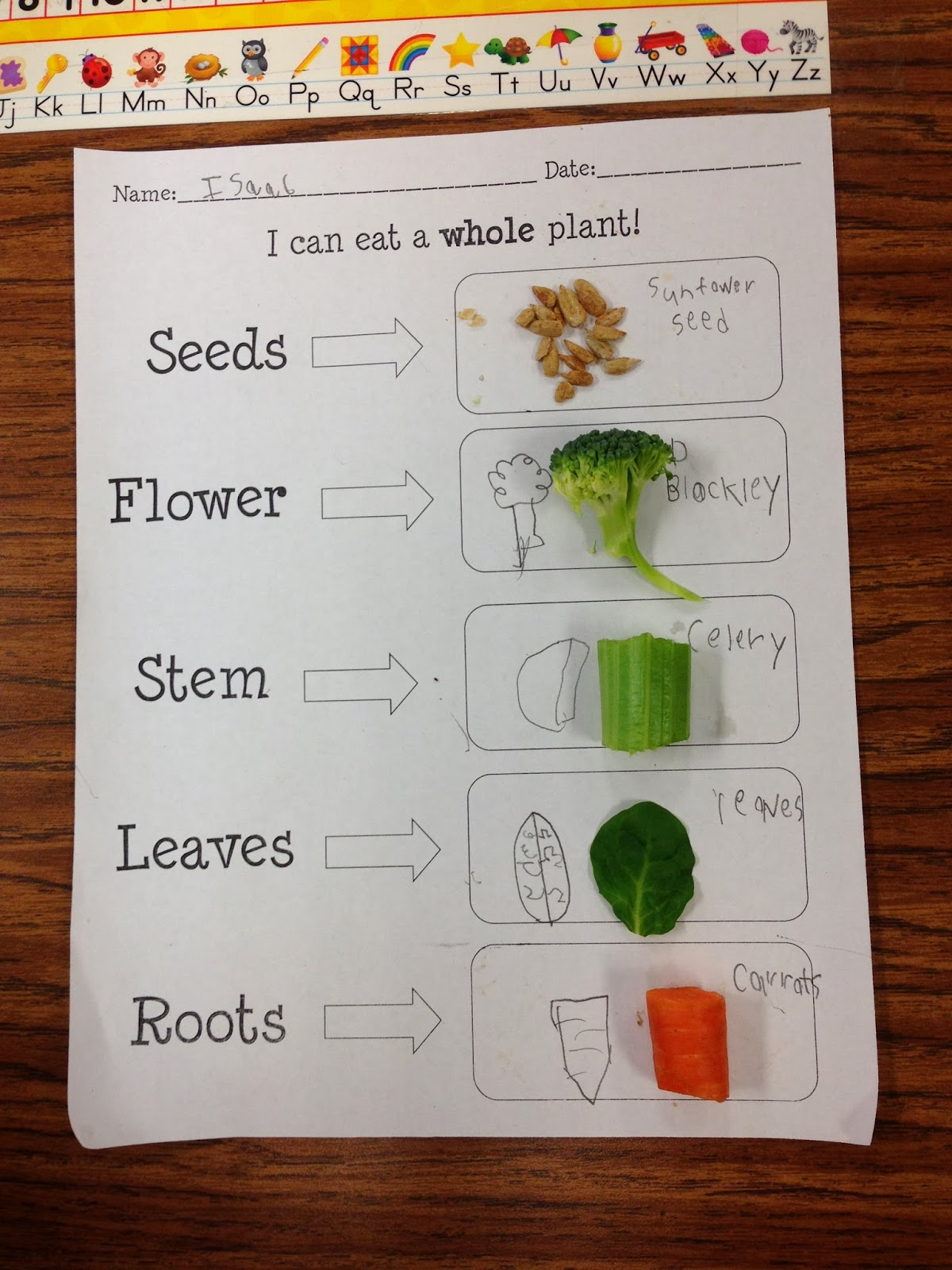 First grade teacher firsts have a plant unit coming up if you would like a copy of this worksheet plus lots more that go with it click here to see it at my tpt store it also comes with a plant experiment and robcynllc Gallery