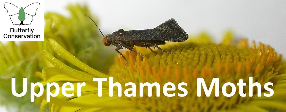 Upper Thames Moths