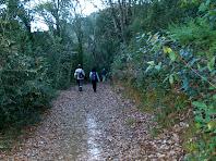 Caminant per l'obaga de la Serra del Terme Gros