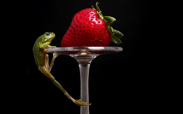 Best Jungle Life strawberry, frog, strawberry wallpaper