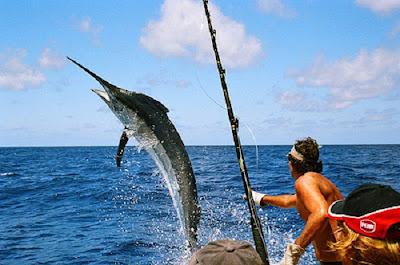cần câu cá