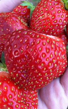 Organic strawberries from Northcutt Ranch