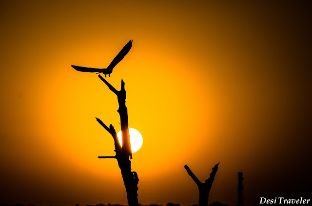 sunset in Tal Chhapar Rajasthan