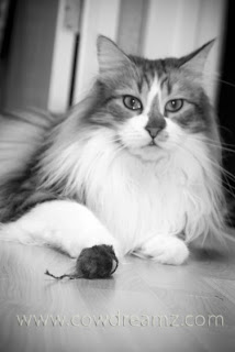 Pretty Cat with mouse toy