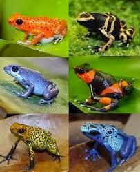 animais companhia algumas curiosidades sobre anfíbios
