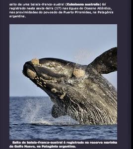 Baleia Franca Austral e registrada com alta cualidade