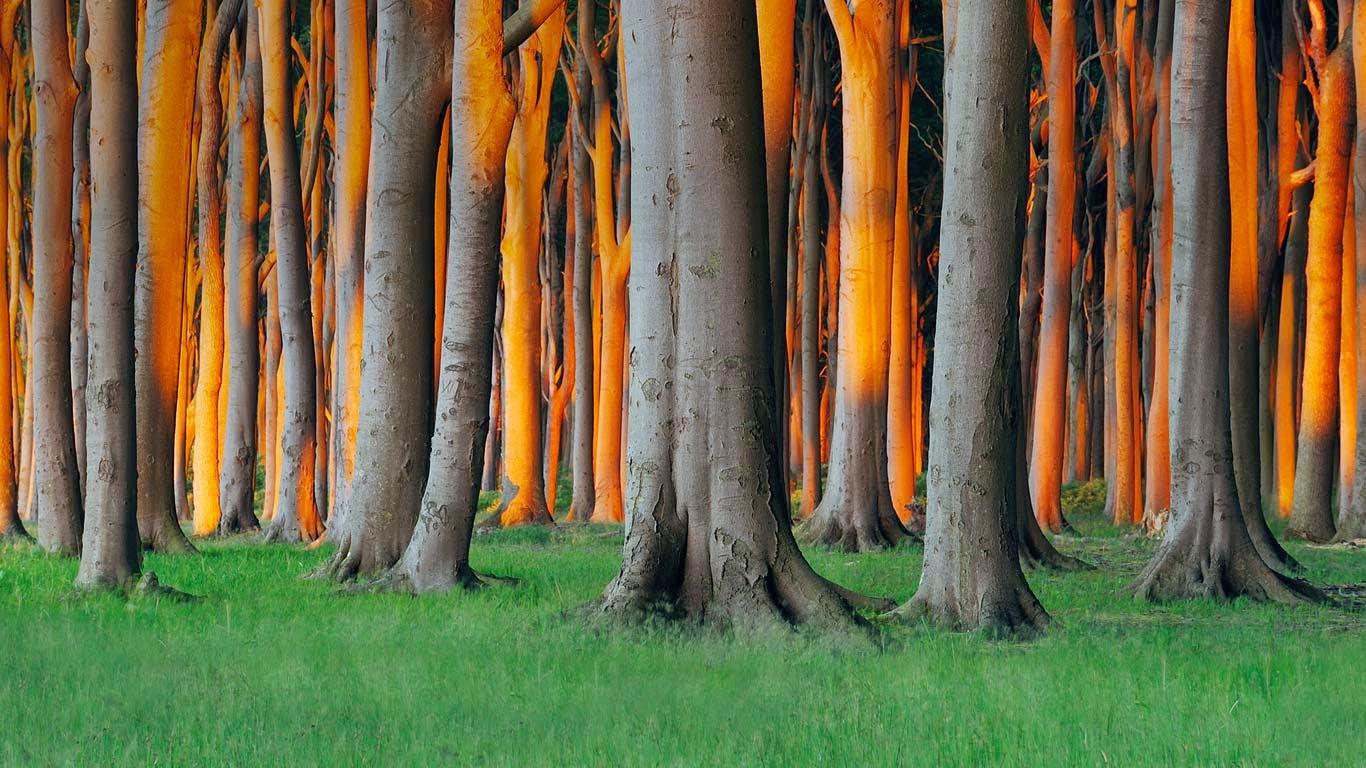 Nienhagen Wood in Mecklenburg-Vorpommern, Germany (© Radius Images/Alamy) 119