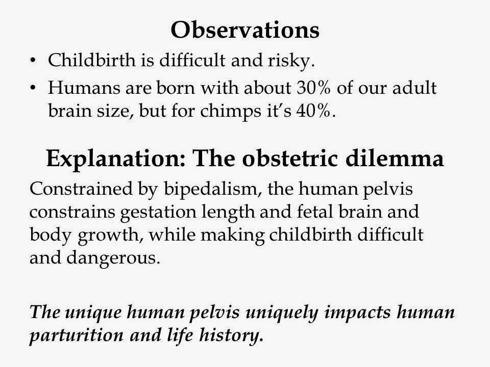 obstetric dilemma Adaptation to bipedal locomotion decreased the size of the bony birth-canal at the same time that the exigencies of tool use selected for larger brains this obstetrical dilemma was solved by.