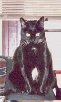 """TPO's cat,  """"Curie"""""""