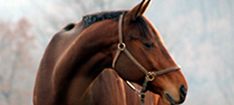 The Morning Feed features retired racehorses for adoption through reputable racehorse retirement and racehorse adoption programs