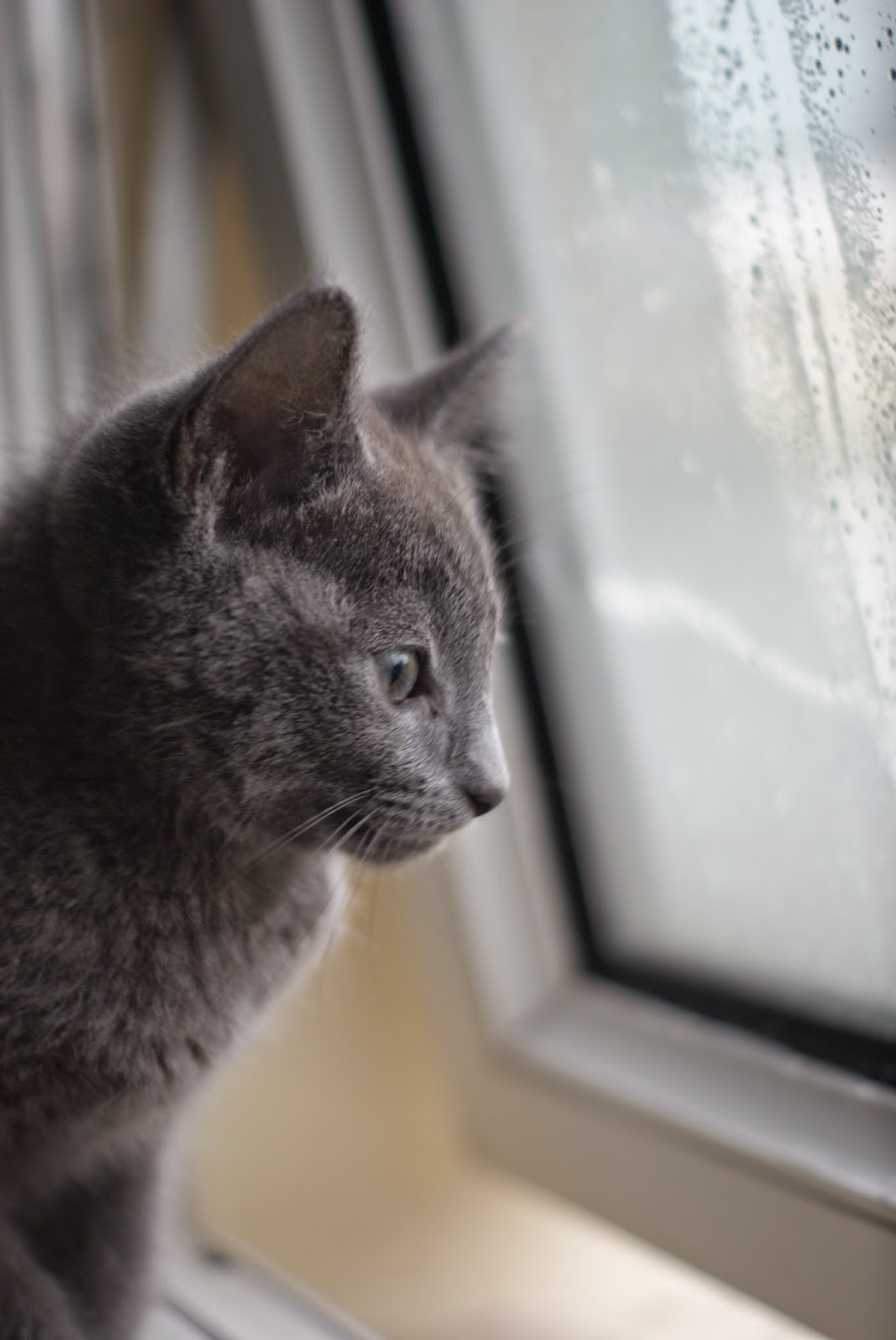 kitten looking out of a window