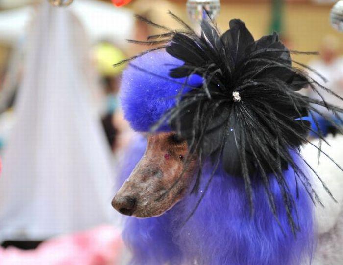 http://3.bp.blogspot.com/-v8ywIRBVeCk/TpuzOmILqYI/AAAAAAAADtM/6WI1j3Z_UzI/s1600/Dog+Grooming+%25282%2529.jpg