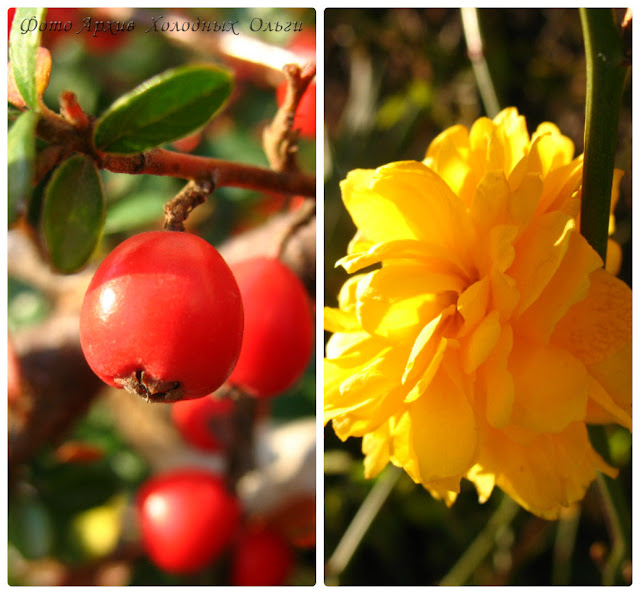 цветочки-ягодки