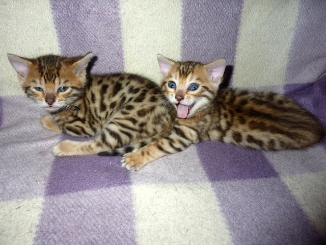funny animals, two cute kittens