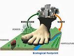 Экологический след - что это?