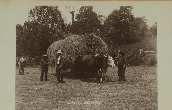 Old Dutch Farm
