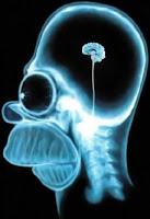 homer simpson mózg
