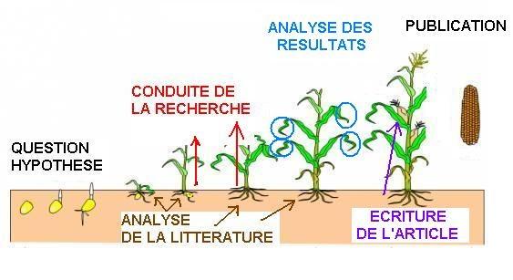 Polynomes - Rapport de Stage - Appa75 - etudiercom