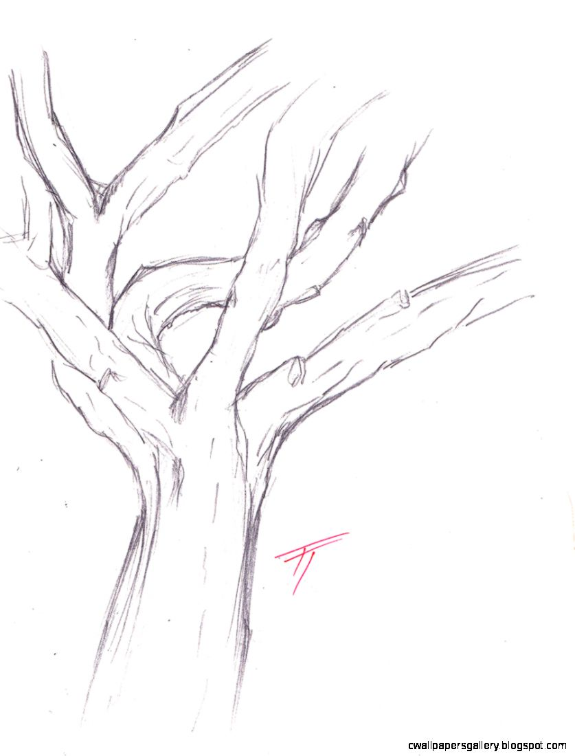 Tree Trunk Drawing Sketch Coloring Page