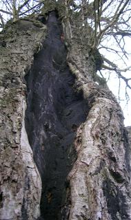 Blitzschlag in Baum
