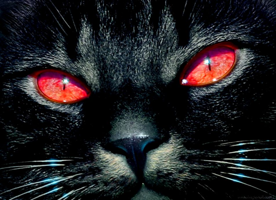Black Cat Red Eyes Hd Wallpaper High Definitions Wallpapers