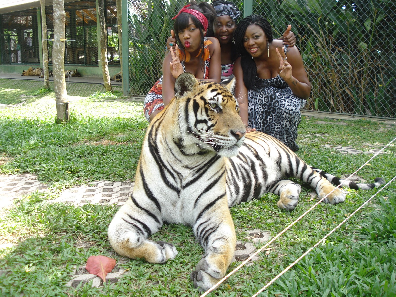 tiger kingdom, black people in thailand, posing with a tiger