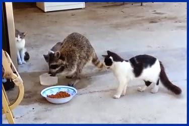 Lustige und niedliche Tiere Facebook - lustige bilder von tieren