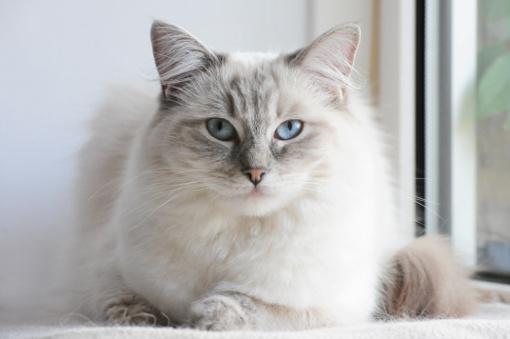 Jak dobrać szampon dla kota