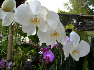 Controlling Pests of Orchid Plant
