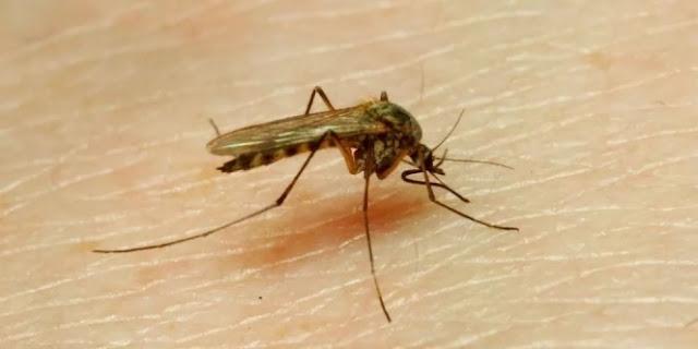 Mengatasi Semut, Kecoa Dan Nyamuk