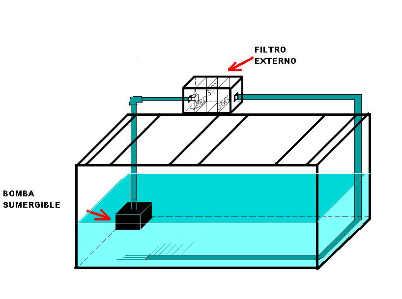 Cómo hacer un acuario fácil y rápido