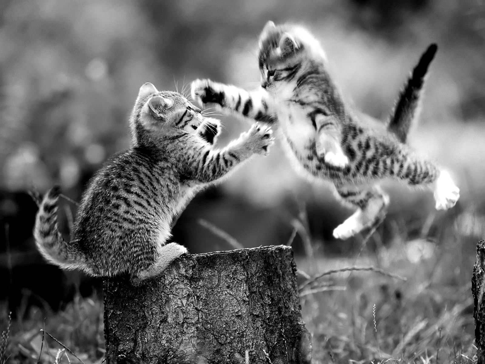 Funny Cat And Kitten Black And White Photos