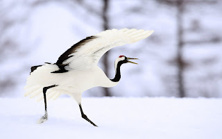 Winter Beautiful Bird HD Wallpaper