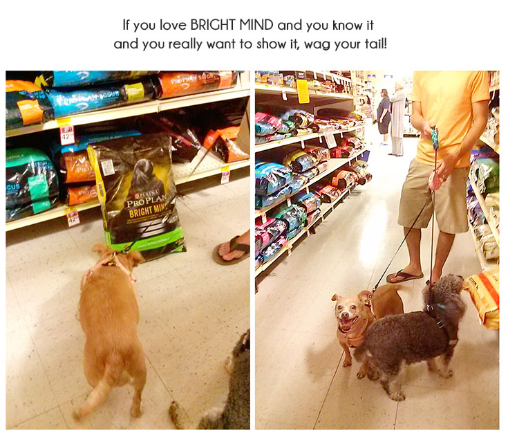 You CAN Teach an Old Dog New Tricks: Our Experience with Purina ProPlan BrightMind