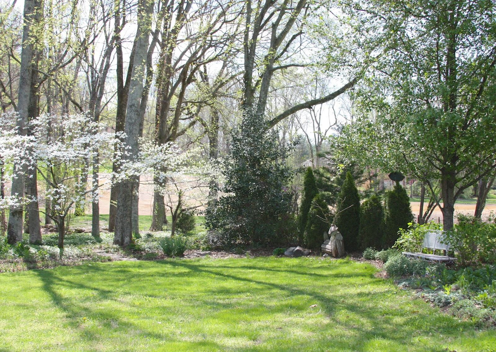 Planting Under Dogwood Trees: Prune your plants for an explosion of ...