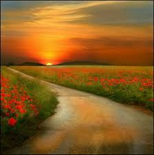 [Imagem: caminho+de+flores+1.jpg]