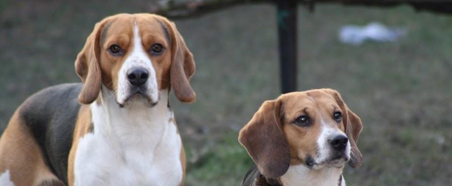 Paul und Yoshi - Ein Beagle kommt selten allein