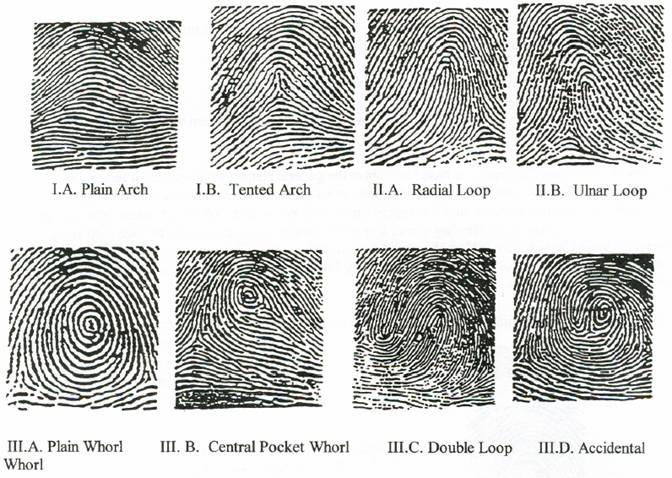 Watch more like Fingerprint Patterns Printable