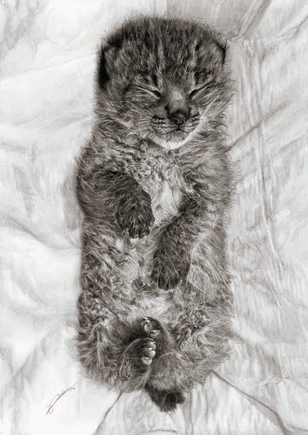 Iberian Lynx Drawing a Piece to Raise Awareness Not