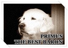 http://hairyhope.blogspot.cz/p/primus-best-baron.html